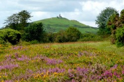 August - Moorland heather and gorse, photo by Ron Quilter