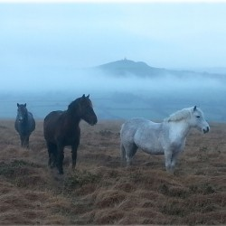 November - Ponies in the mist, photo by John Wheeler